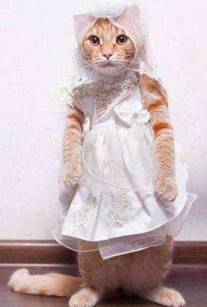 72704cb6941b315e4a5d0f56b9f87766-cat-dresses-bridal-dresses.jpg